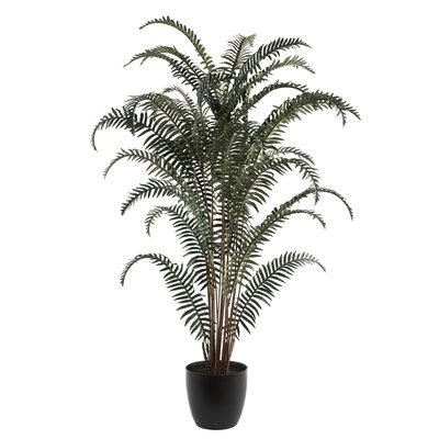 PTMD - Tree Fern