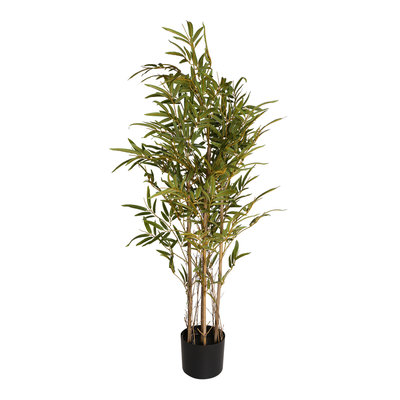 PTMD - Tree green bamboo